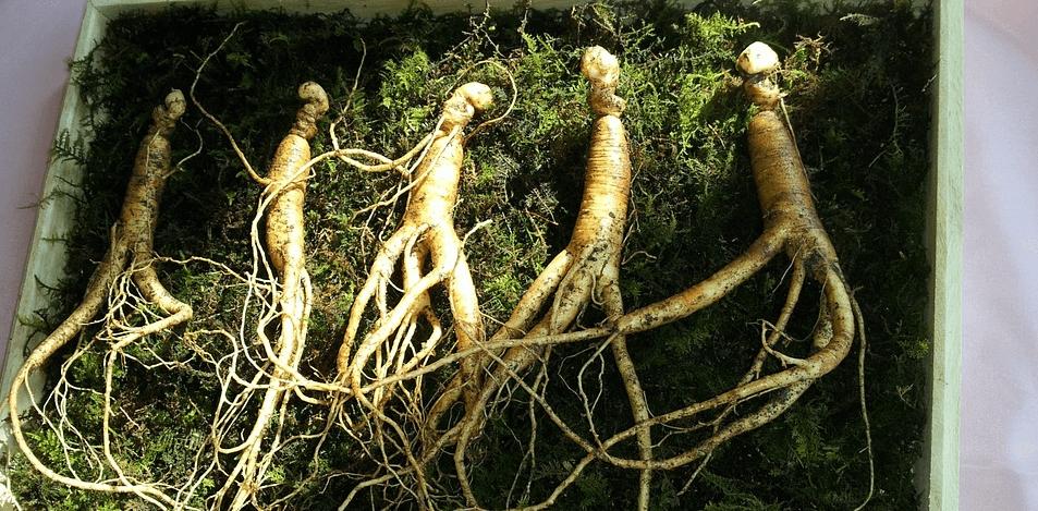 natürliche-potenzmittel