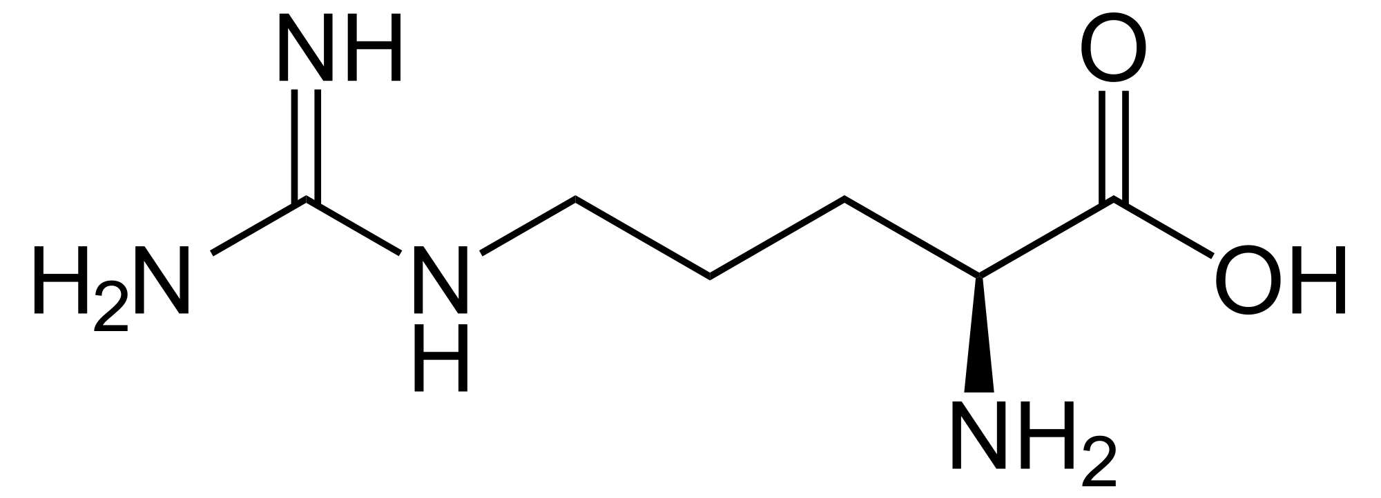 l-arginin-natuerliches-potenzmittel