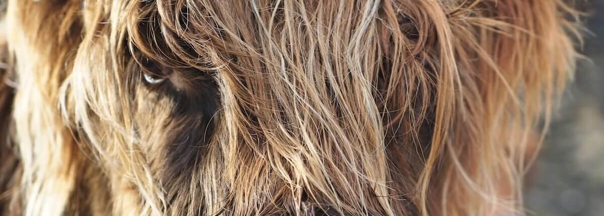 Haarpflege Tipps Infos Haarausfall